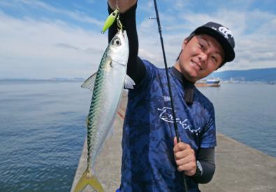 小型回遊魚もフォールで釣れる!