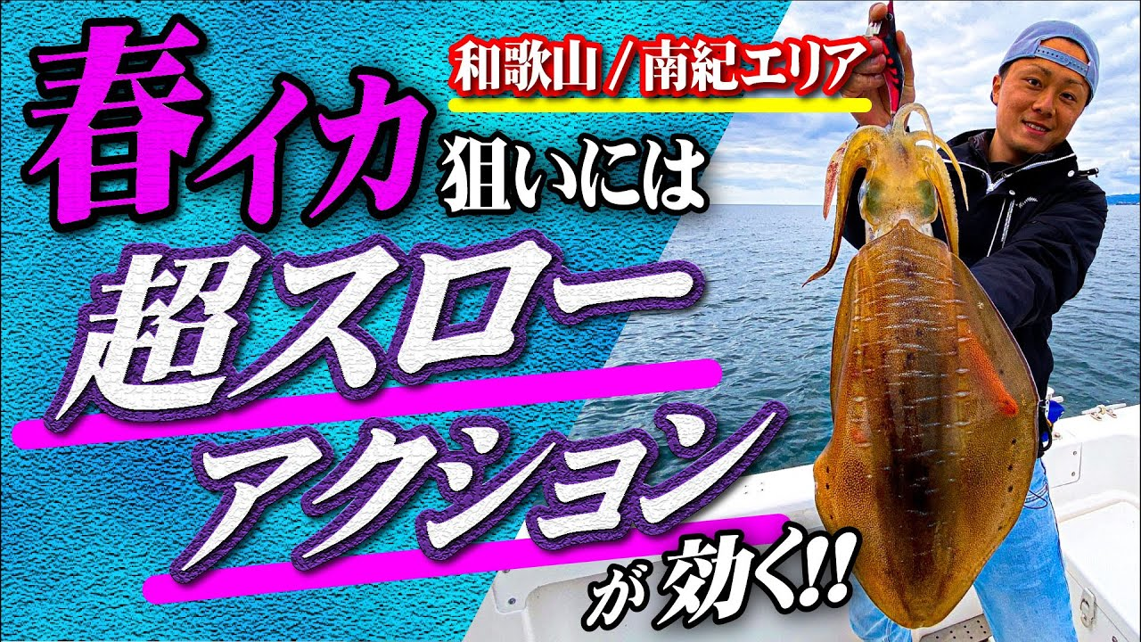 【春イカ】超スローアクションで狙う、南紀白浜ボートエギング!